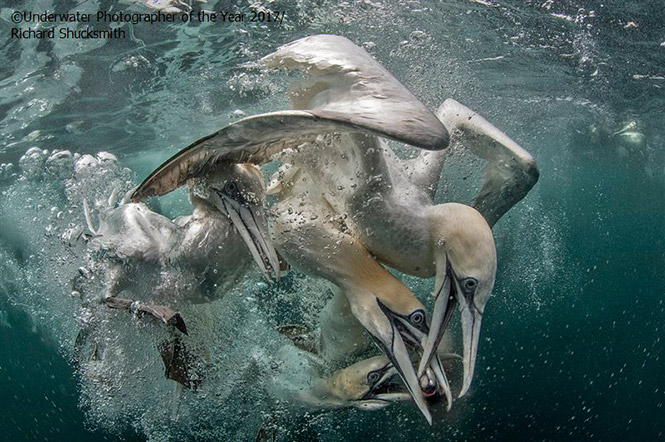 British Waters Wide Angle RUNNER UP: Competition by Richard Shucksmith