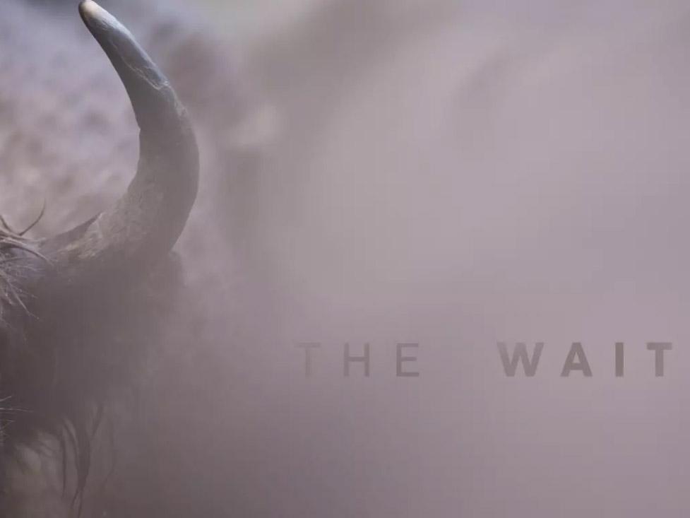 The Wait, μία ταινία μικρού μήκους για τη φωτογράφιση άγριας ζωής που πρέπει να δείς