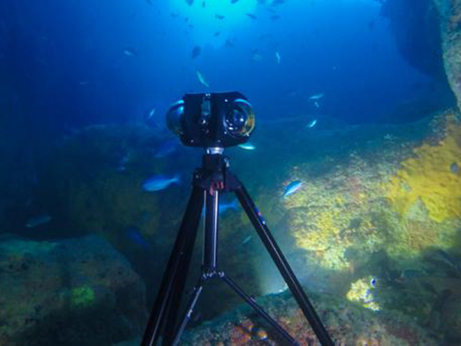 Boxfish-1