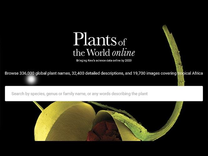 Plants of the World Online: Μία βάση δεδομένων για όλα τα φυτά του κόσμου