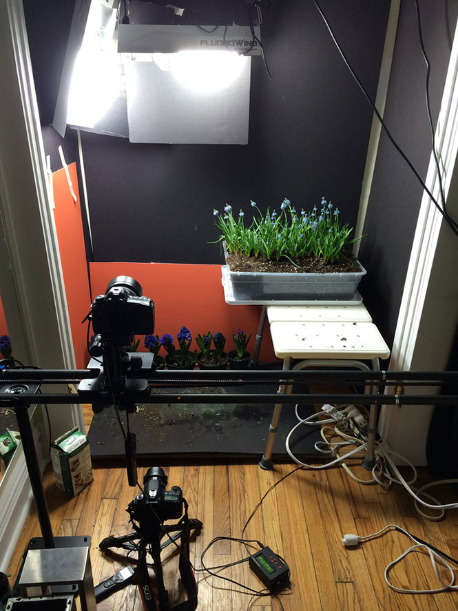 flower-bloom-time-lapse-video-bts-2
