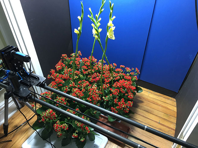 flower-bloom-time-lapse-video-bts-6