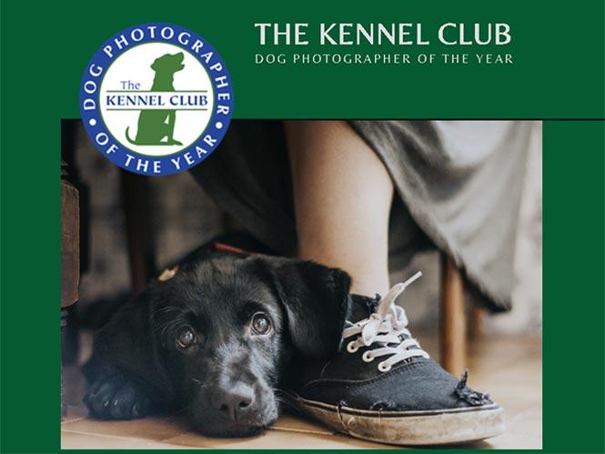 Ανακοινώθηκαν οι νικητές του διαγωνισμού Dog Photographer of the Year