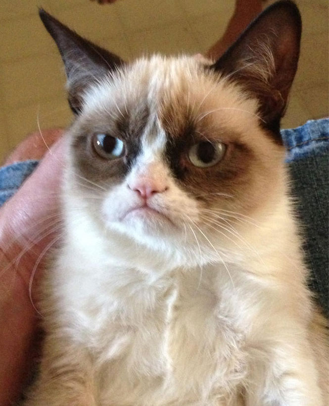 Η φωτογραφία μίας γάτας που έγινε viral και δημιούργησε μία αυτοκρατορία