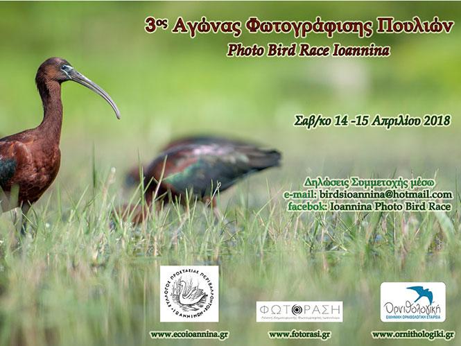 3ος Αγώνας φωτογράφισης πουλιών στα Ιωάννινα