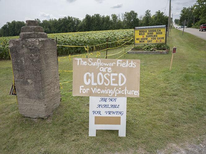 """Φάρμα με ηλιοτρόπια δέχτηκε την """"επίθεση"""" χιλιάδων επισκεπτών για μία selfie"""