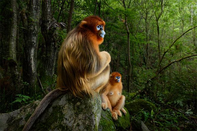 Wildlife Photographer of The Year 2019: Ξεκίνησε η περίοδος υποβολής συμμετοχών