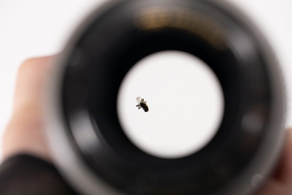 Και όμως η LensRentals βρήκε μία μύγα μέσα σε ένα Canon 70-200mm