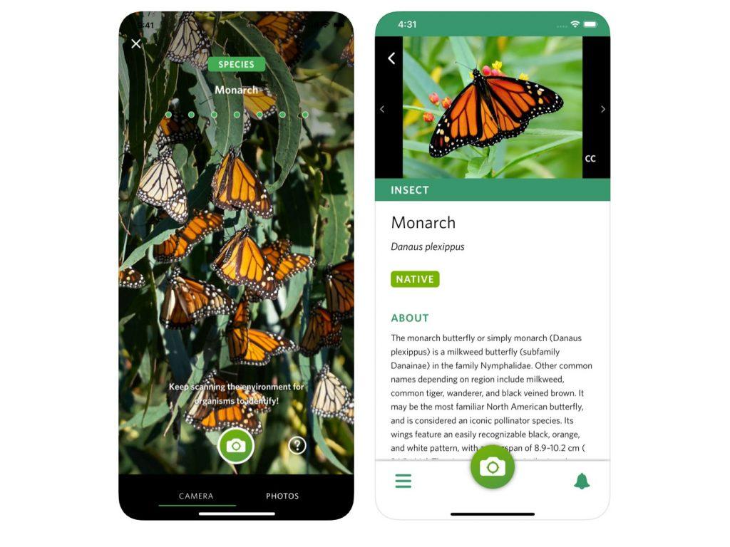 Seek: Η απόλυτη εφαρμογή για φωτογράφους φύσης, μάκρο και άγριας ζωής