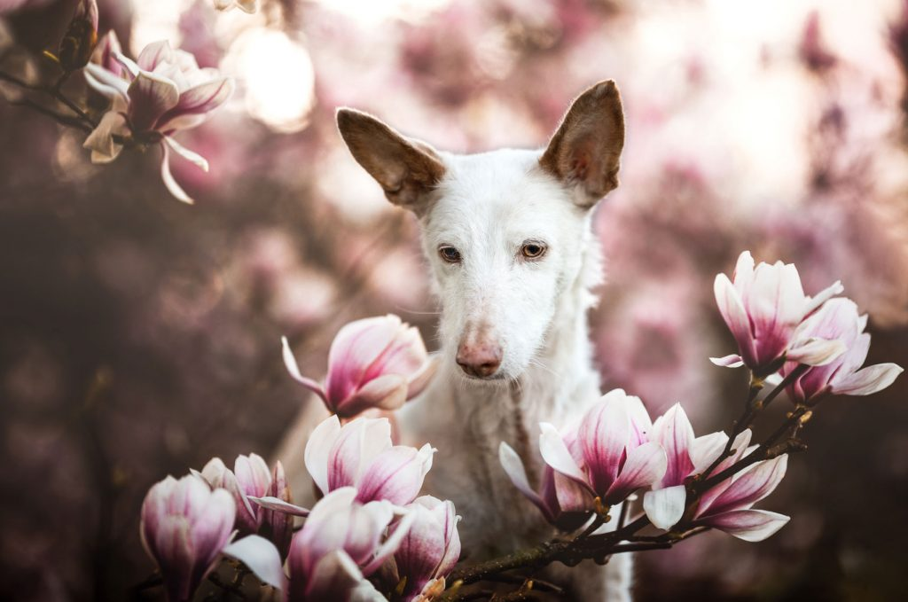 Dog Photographer of the Year 2019: Ανακοινώθηκαν οι νικητές