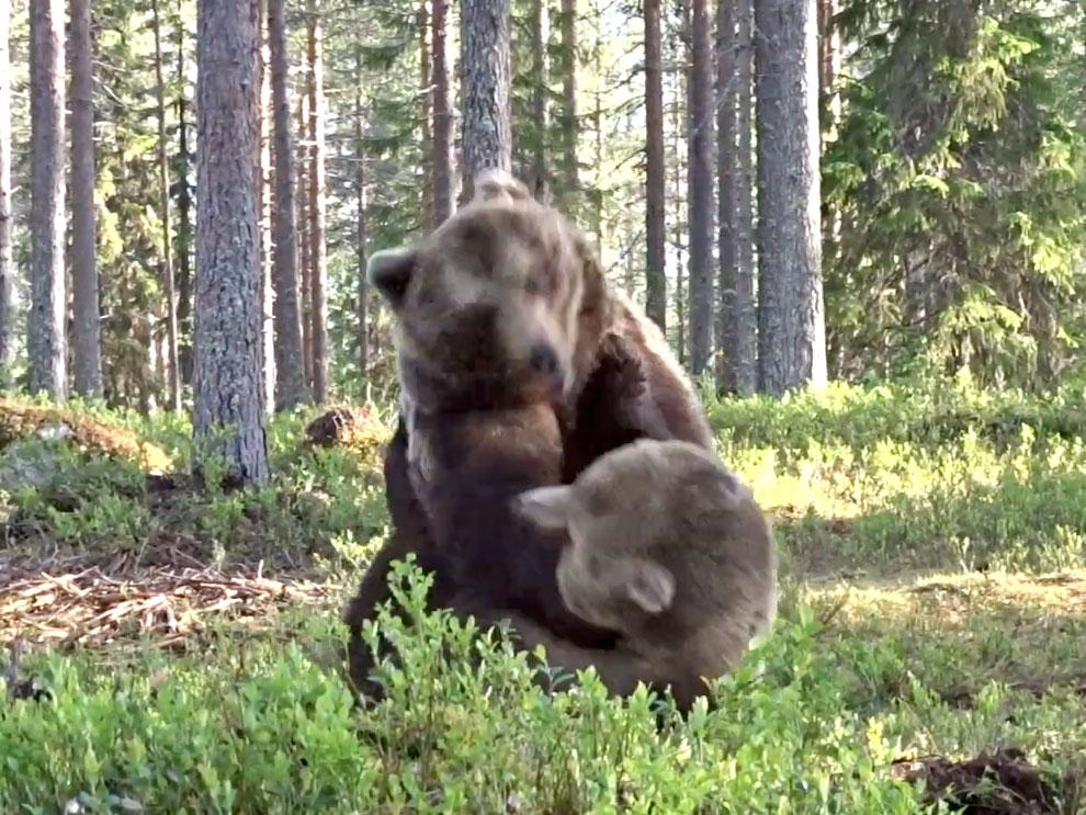 Φωτογράφος άγριας ζωής βρέθηκε μπροστά σε επική μάχη αρκούδων