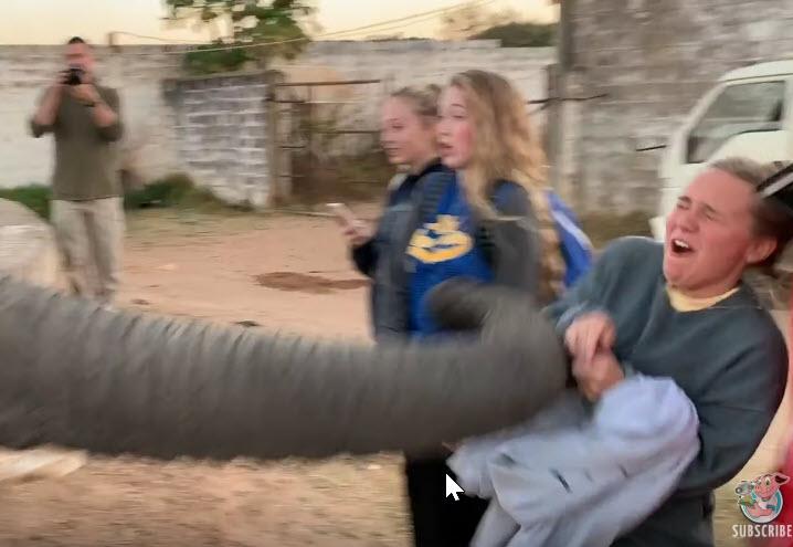 Αυτός ο ελέφαντας δεν θέλει να τον βγάζουν φωτογραφίες!
