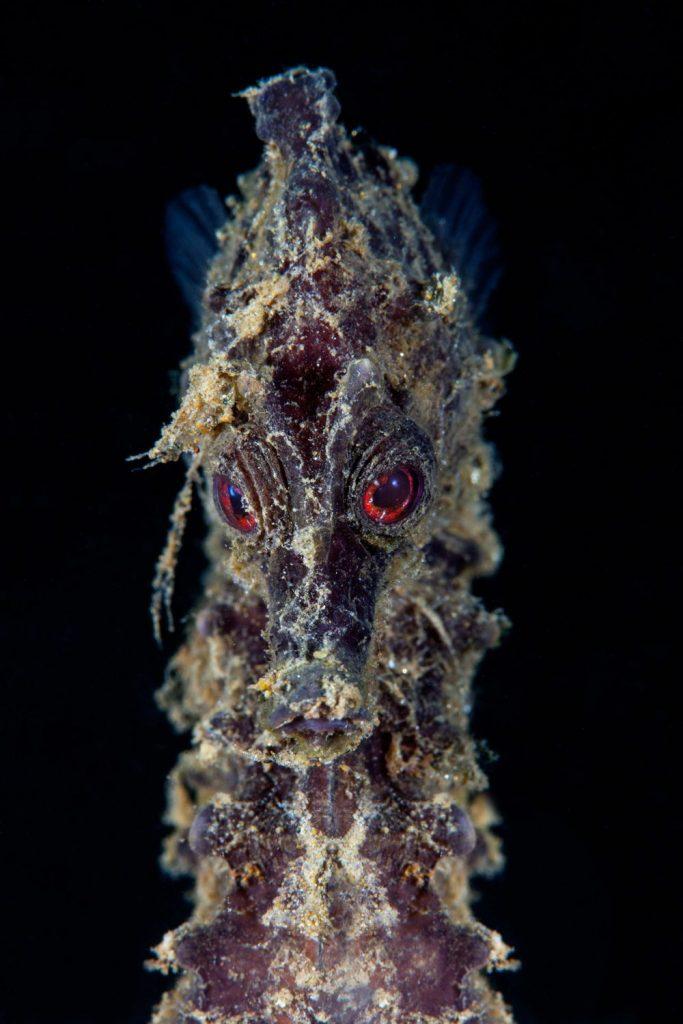 Ανακοινώθηκαν οι νικητές του διαγωνισμού υποβρύχιας φωτογραφίας του Scuba Diving Magazine