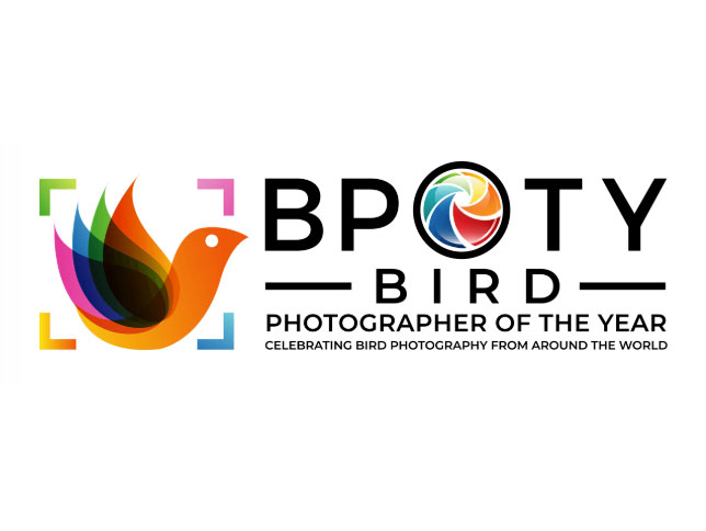Bird Photographer of the Year 2020: Αυτοί είναι οι φιναλίστ, δύο Έλληνες ανάμεσα τους!