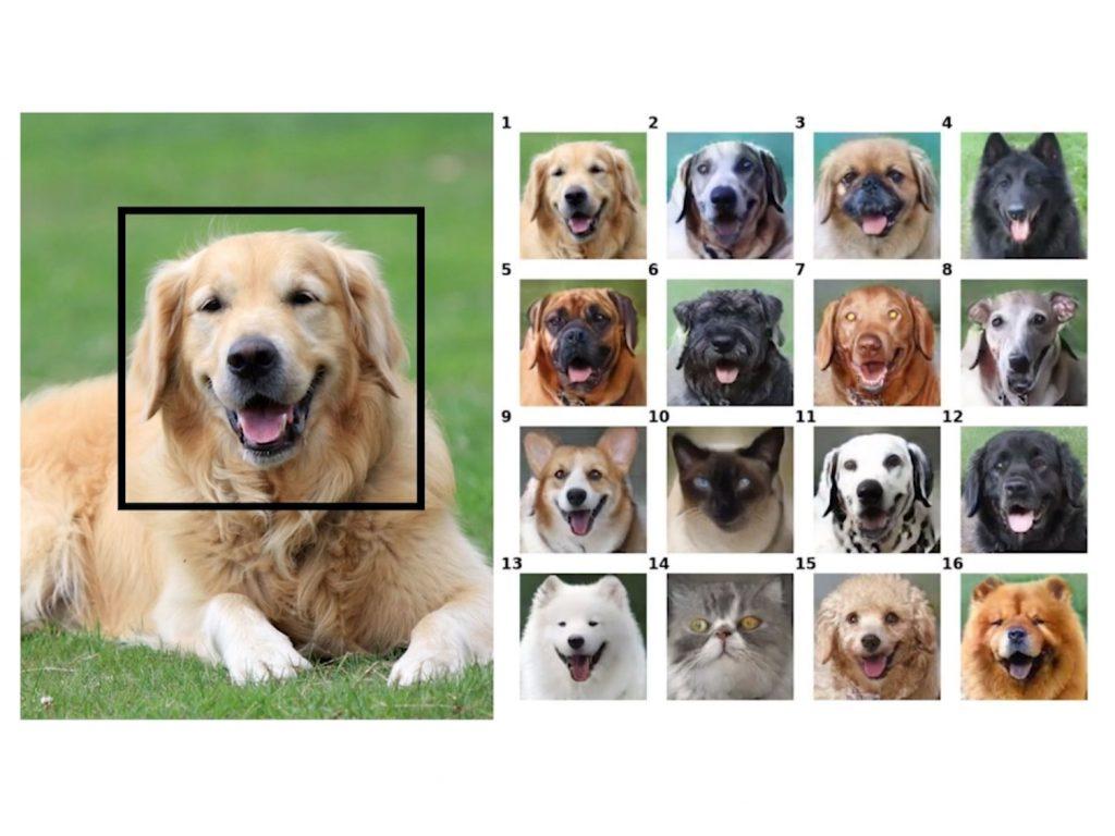GANimal: Νέο λογισμικό τεχνητής νοημοσύνης μετατρέπει τα ζώα σε άλλα ζώα