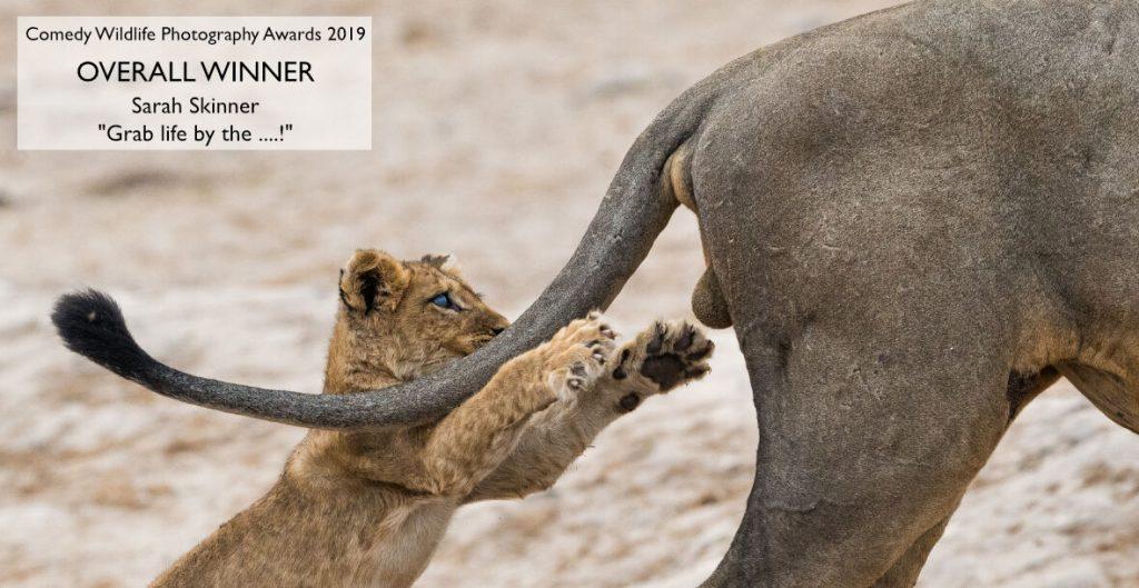 Ανακοινώθηκαν οι νικητές του Comedy Wildlife Photography Awards 2019