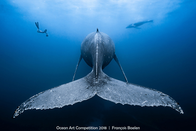 Ocean Art Underwater Photo Competition 2019: Έπαθλα πάνω από 80.000 δολάρια