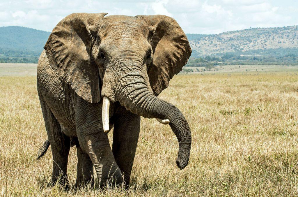 Άνδρας έθεσε σε κίνδυνο το παιδί του για μία φωτογραφία με ελέφαντα!