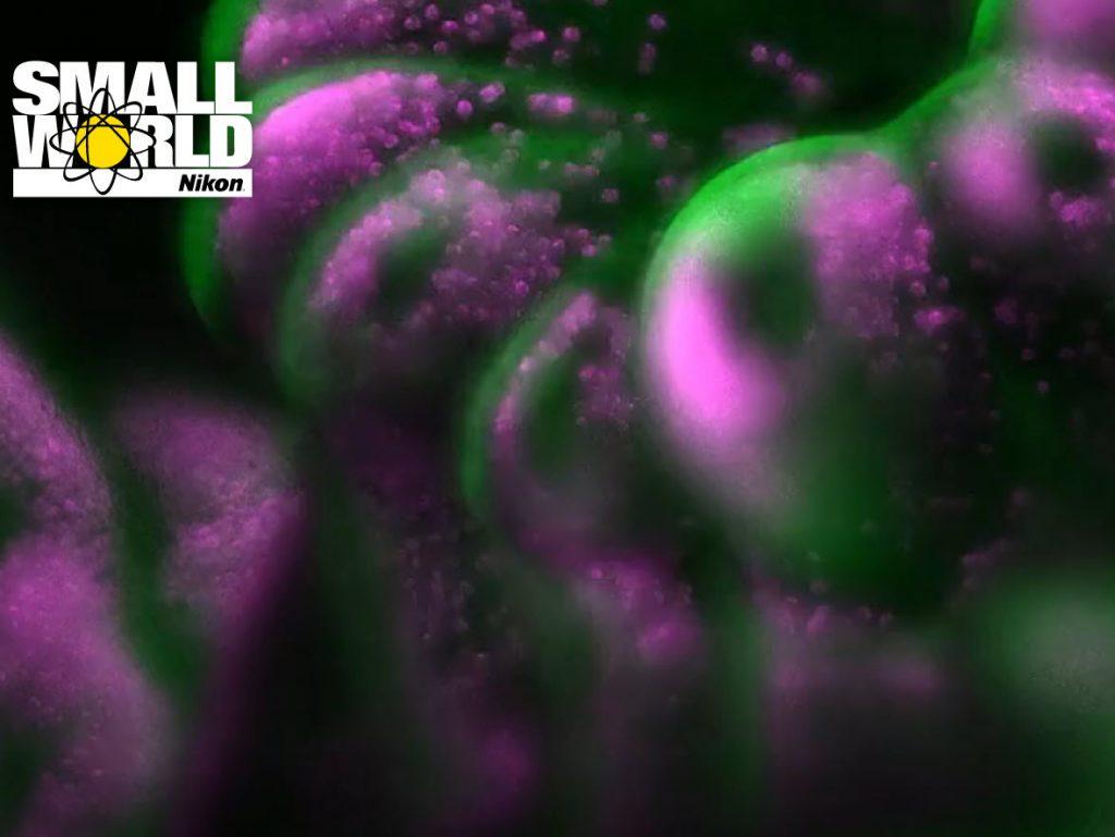 Nikon Small World in Motion video 2019: Αυτοί είναι οι νικητές!