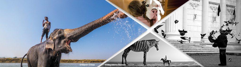 Συναντήσεις – άνθρωποι και ζώα : Διαγωνισμός Φωτογραφίας για το Περιβάλλον από την Olympus!