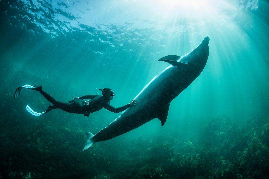 O George Karbus παρουσίασε μία εντυπωσιακή σειρά φωτογραφιών από την άγρια ζωή των ωκεανών!