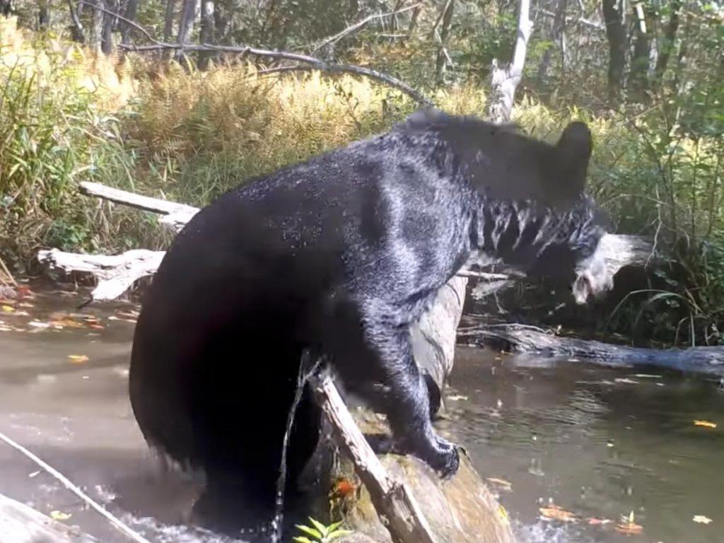 Φωτογράφος καταγράφει σε βίντεο με κάμερα-παγίδα δεκάδες άγρια ζώα κοντά στο σπίτι του!