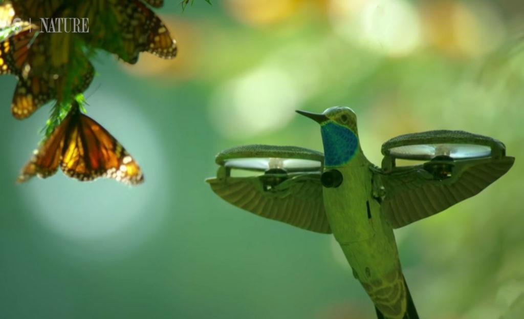 Αυτό το κολίμπρι είναι ένα μικρό drone με κάμερα και χρησιμοποιείται ως κατάσκοπος της φύσης!
