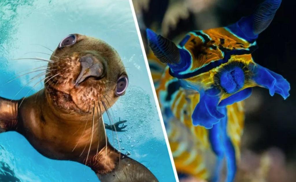 Mαθήματα υποβρύχιας φωτογραφίας από το BluewaterU (3 προσφέρονται ΔΩΡΕΑΝ)!