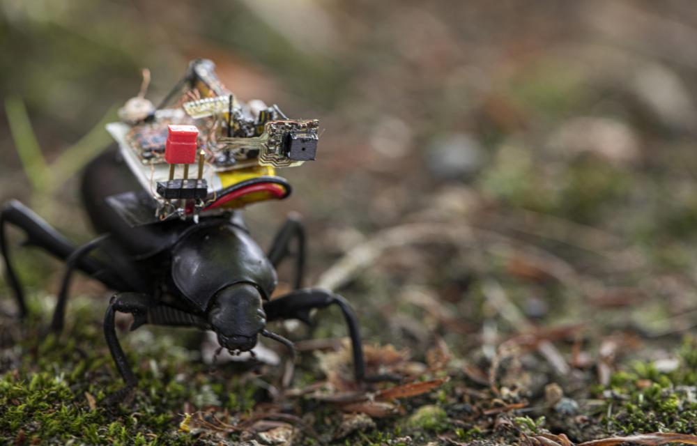Ερευνητές παρουσίασαν κάμερα που μπορεί να τοποθετηθεί σε έντομα και στριμάρει εικόνα σε smartphone!