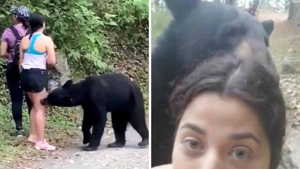Αρκούδα πλησιάζει  πεζοπόρους και τους μυρίζει από κοντά όταν μία γυναίκα αποφασίζει να βγάλει selfie μαζί της! [βίντεο]