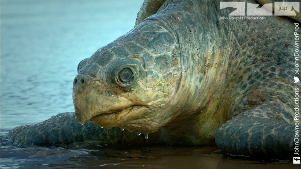 Spy Creatures: Χελώνα – ρομπότ πoυ γεννάει αυγά – κάμερες και όρνιο – drone! Αυτός είναι ο τρόπος που κατασκοπεύουμε την φύση!