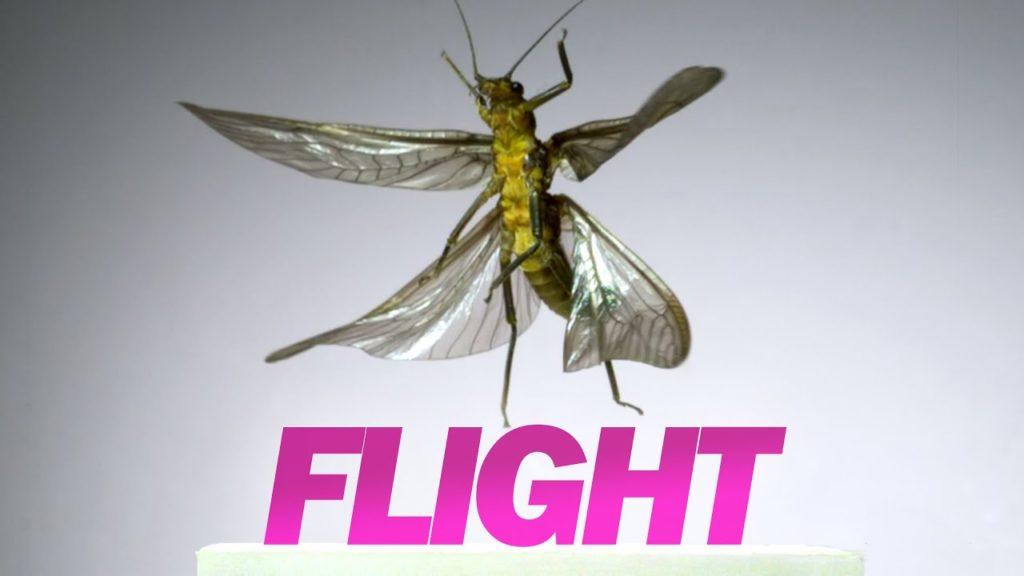 Φοβερό βίντεο με έντομα να απογειώνονται σε αργή κίνηση με 3.200 fps