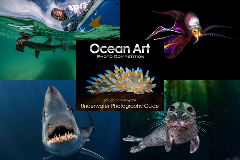 Ocean Art Safe Under The Sea: Αυτοί είναι οι νικητές και οι υπέροχες υποβρύχιες εικόνες τους!