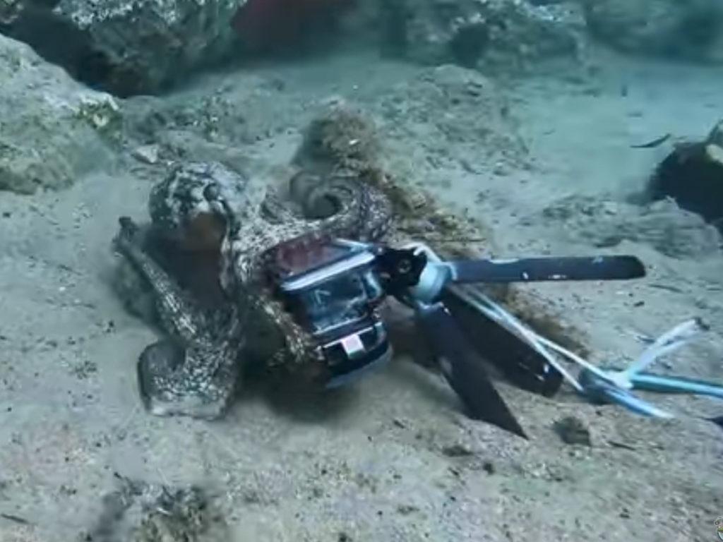 Δύτης παλεύει με χταπόδι για να πάρει πίσω την GoPro του!