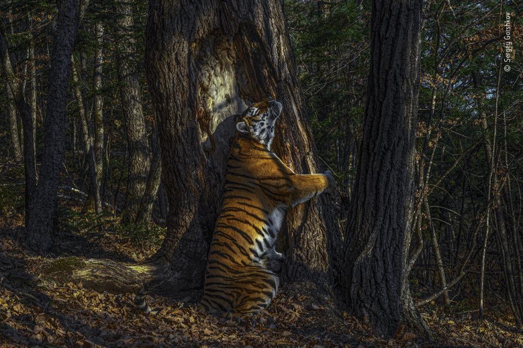 Wildlife Photographer of the Year 2020: Αυτοί είναι οι μεγάλοι νικητές του πιο σημαντικού διαγωνισμού φωτογραφίας άγριας ζωής!