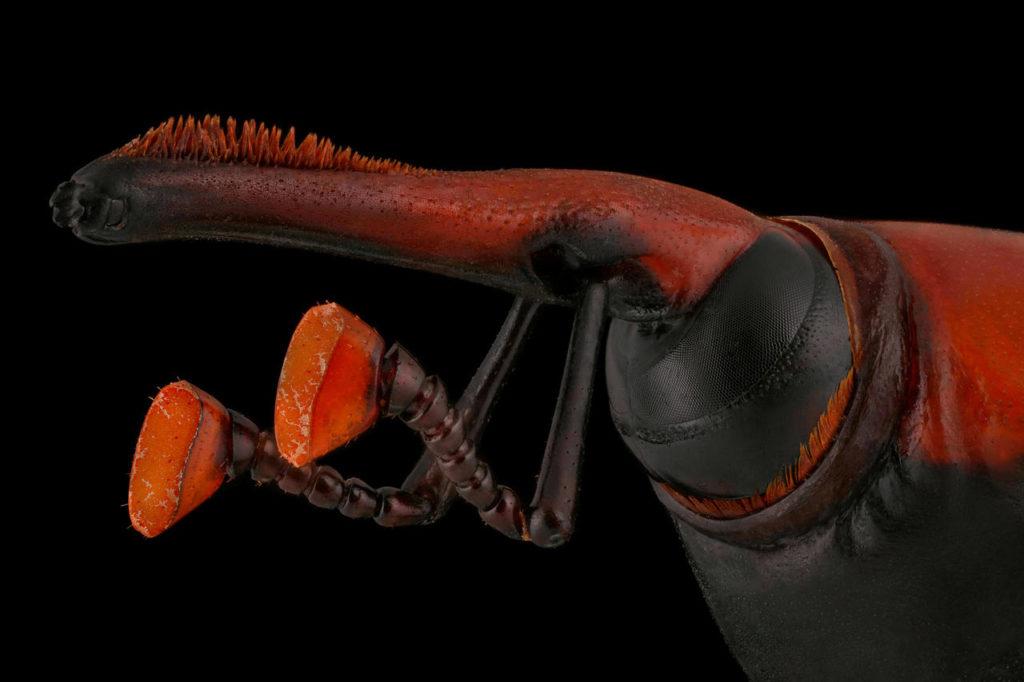 Luminar Bug Photography Awards 2020: Αυτοί είναι οι νικητές και εσύ θα δεις τα έντομα με άλλο μάτι
