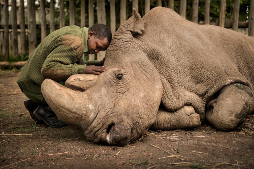 Wildlife Photographer of the Year 2020: Ψηφίστε για το βραβείο κοινού!