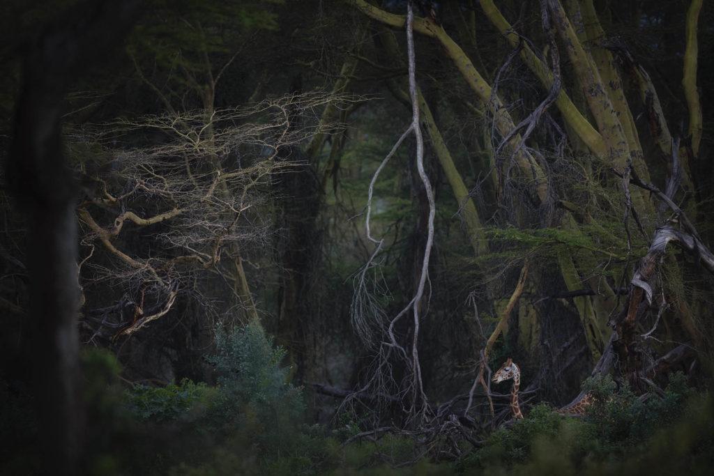 Nature Photographer of the Year: Εντυπωσιάζουν οι φωτογραφίες των νικητών για το 2020!