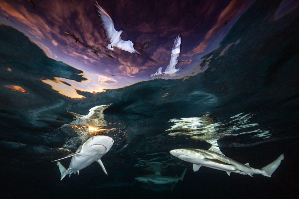 Underwater Photographer of the Year 2021: Ανακοινώθηκαν οι νικητές (πρώτη φορά κερδίζει μία γυναίκα)!