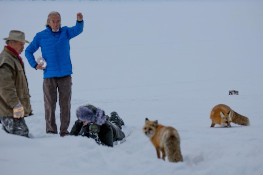 Γνωστός φωτογράφος άγριας ζωής κατηγορείται ότι τάισε άγρια ζώα για να τα φωτογραφίσει!
