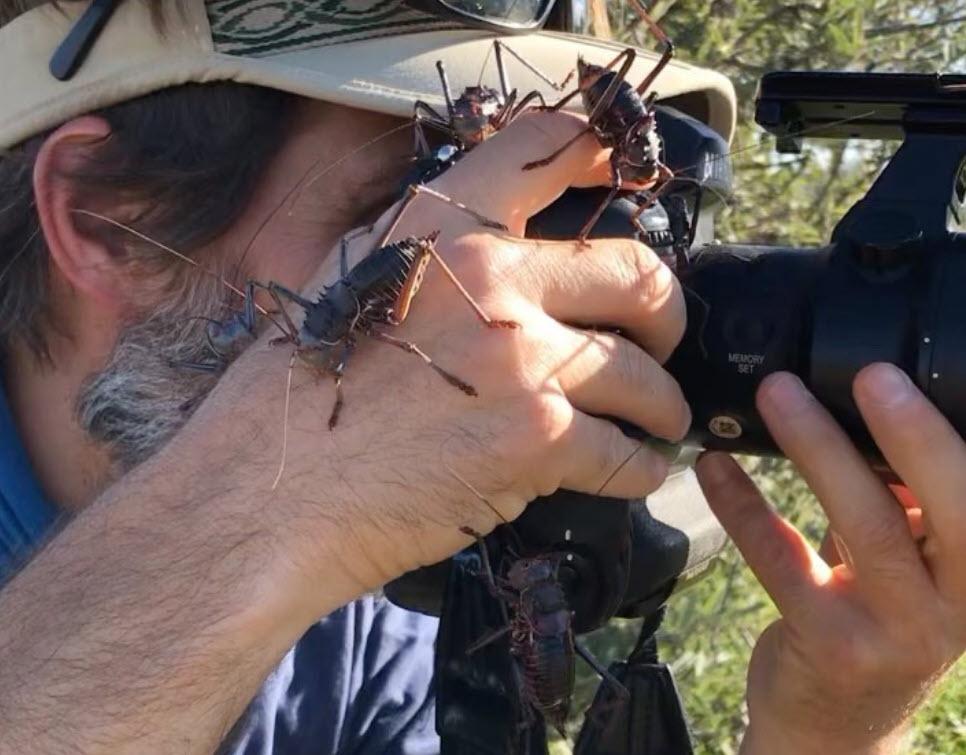 Αυτός ο φωτογράφος συνεχίζει τις λήψεις του ενώ τεράστια έντομα περπατάνε στο χέρι του!