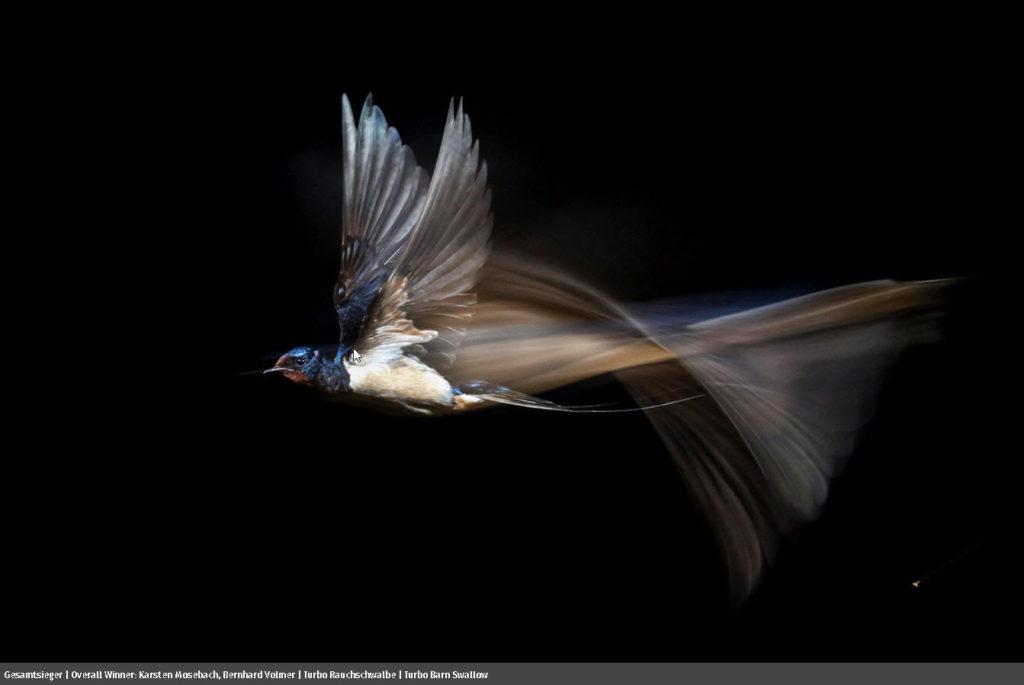 GDT Nature Photographer of the Year 2021: Ανακοινώθηκαν οι μεγάλοι νικητές φωτογραφίας φύσης!