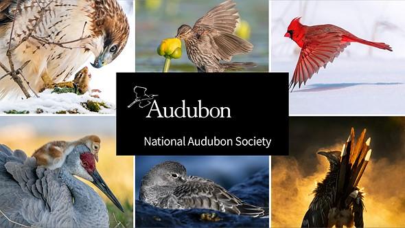 Δείτε τις εικόνες και τα βίντεο των μεγάλων νικητών του διαγωνισμού φωτογραφίας πτηνών Audubon