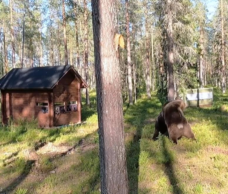 Φωτογράφοι άγριας ζωής έζησαν από απόσταση μερικών μέτρων μία επική μάχη τεράστιων αρκούδων!