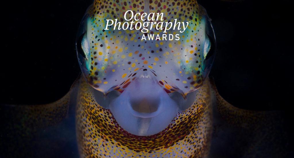 Ocean Photography Awards 2021: Αυτοί είναι οι μεγάλοι φιναλίστ, ανάμεσα τους ο Νικόλας Σαμαράς!