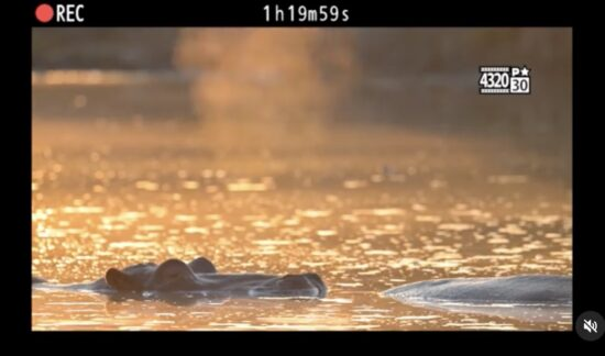Διέρρευσε το δεύτερο teaser βίντεο της Nikon Z 9!